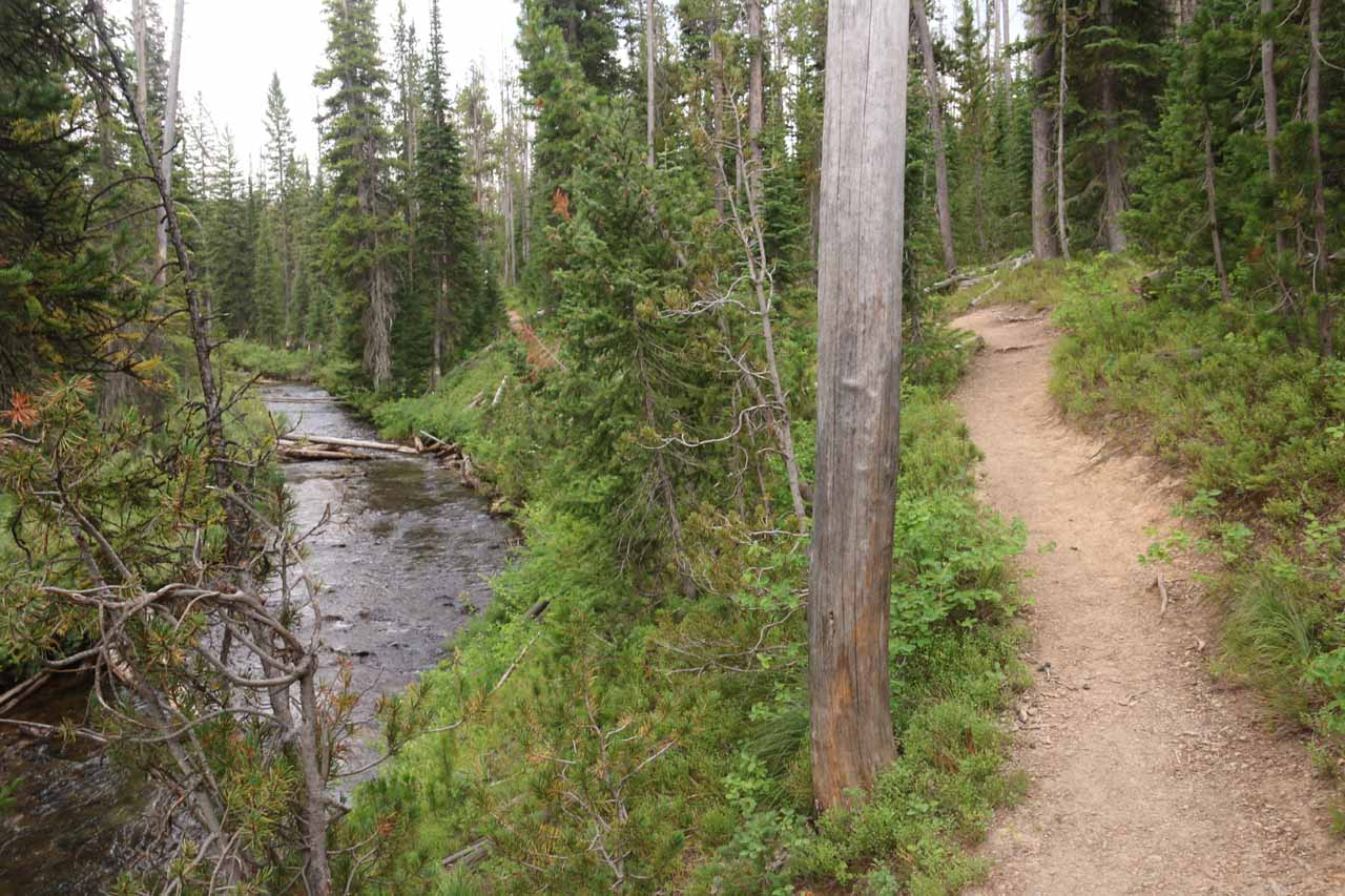 Hiking back along Cascade Creek on the return
