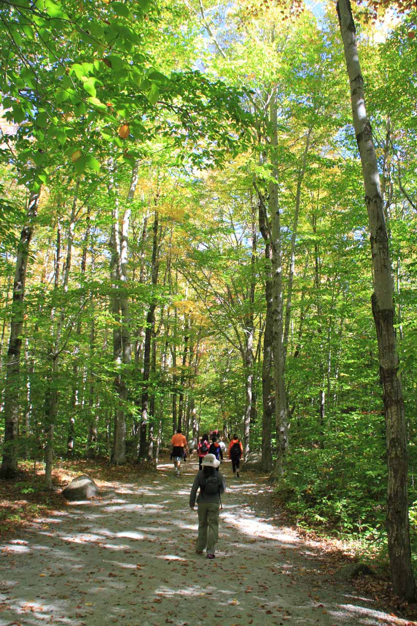 The initial section of trail was through a forest that provided some shade from the sun