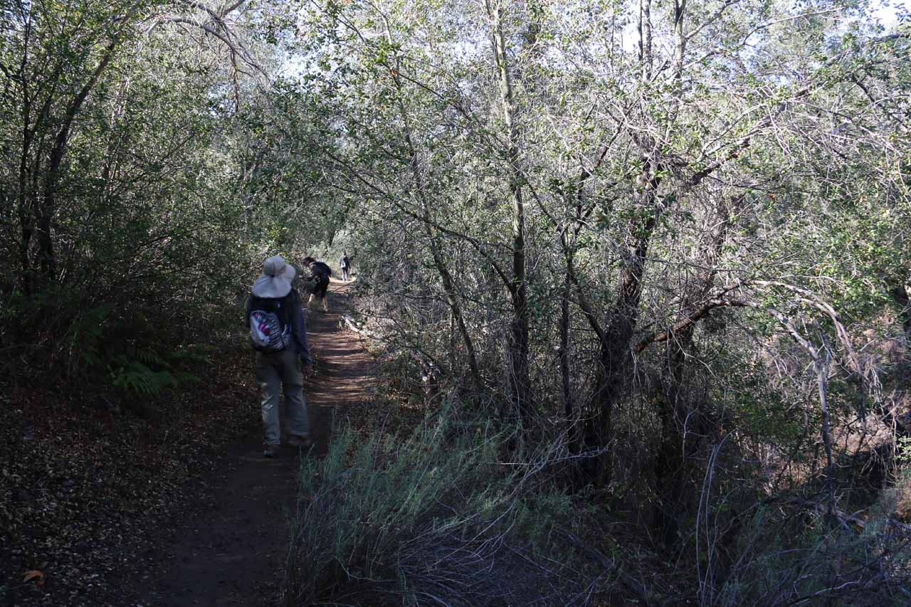 This was the so-called 'foresty' part of the trail, which skirted Camp Creek while cutting through this prickly grove of foliage. Apparently if you come here later in the season, this prickly foliage may have poison oak amongst them