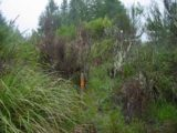 Toakakura_Falls_006_11172004 - This was the red arrow on a pole that I tried to follow in search of Matariki Falls, but it turned out to be a pretty futile overgrown bushwhack