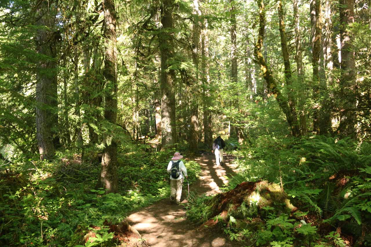 Inside the flat forested start of the trail where we were surrounded by tall trees and ferns