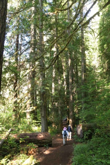 Toketee_Falls_017_07142016 - Dad and Mom hiking through the initial forested stretch of the Toketee Falls Trail as it was mostly flat in this stretch