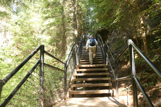 Toketee_Falls_032_07142016 - Mom going up a climbing stretch of the Toketee Falls Trail, which skirted alongside the rushing North Umpqua River