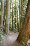 Toketee_Falls_098_07142016 - Back amongst the tall trees near the Toketee Falls Trailhead