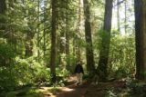 Toketee_Falls_100_07142016 - Dad amongst the tall trees as we were nearing the Toketee Falls Trailhead again