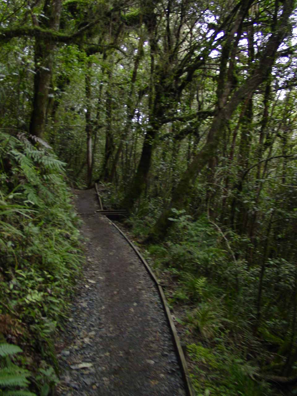 Eventually the track descended deep enough to where we re-entered lush temperate forest