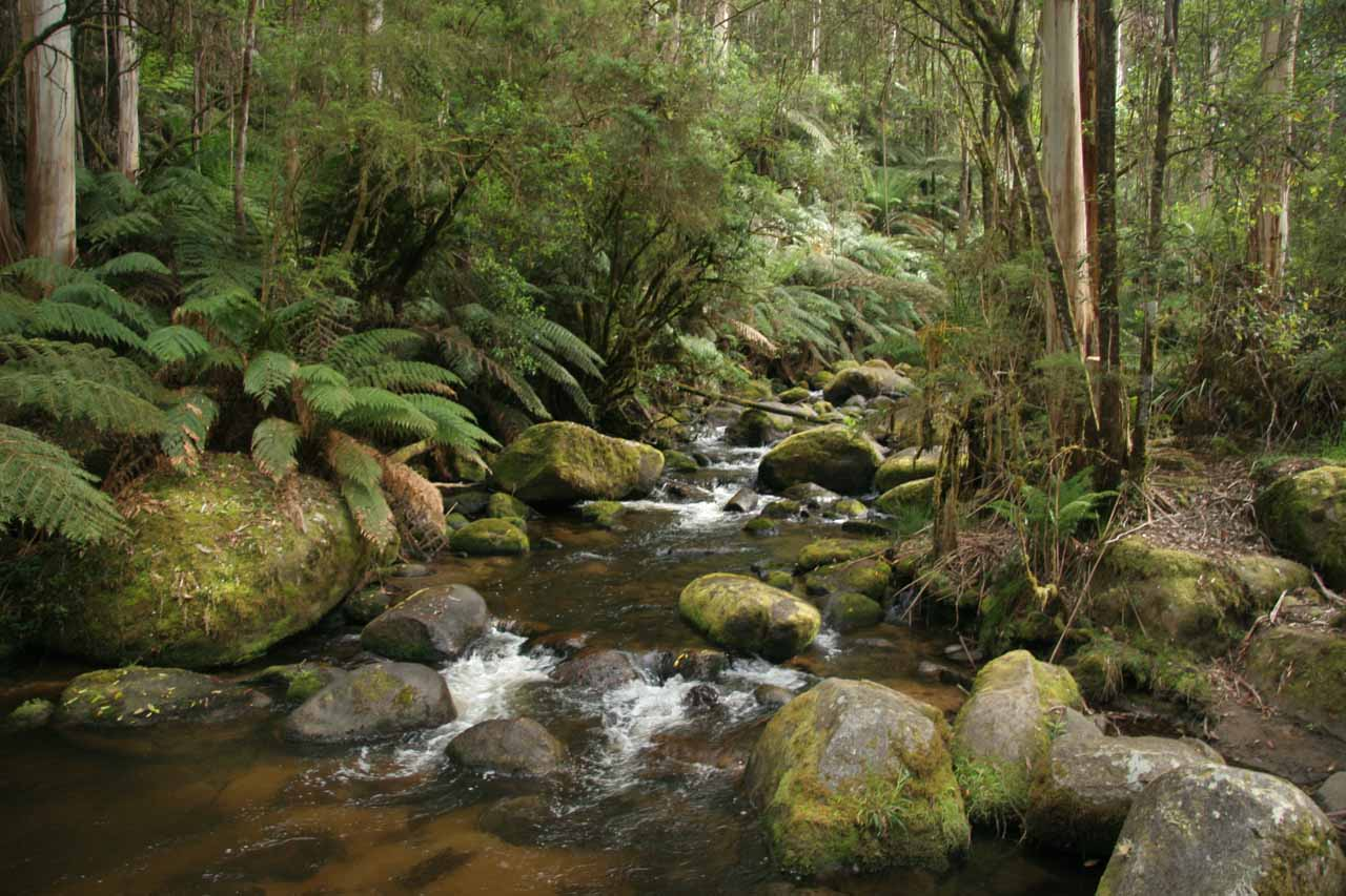 Looking up at Little Toorongo River from the footbridge near the trailhead