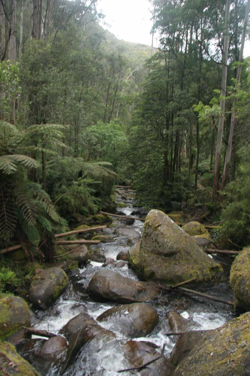 The trail following Toorongo Creek