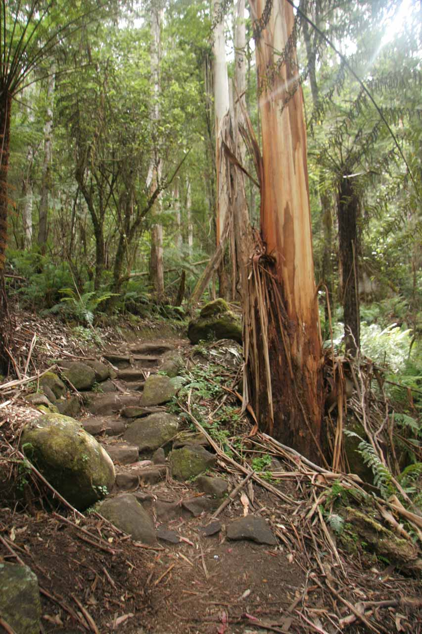 Eventually, the trail started to ascend gently to get up to the Toorongo Falls