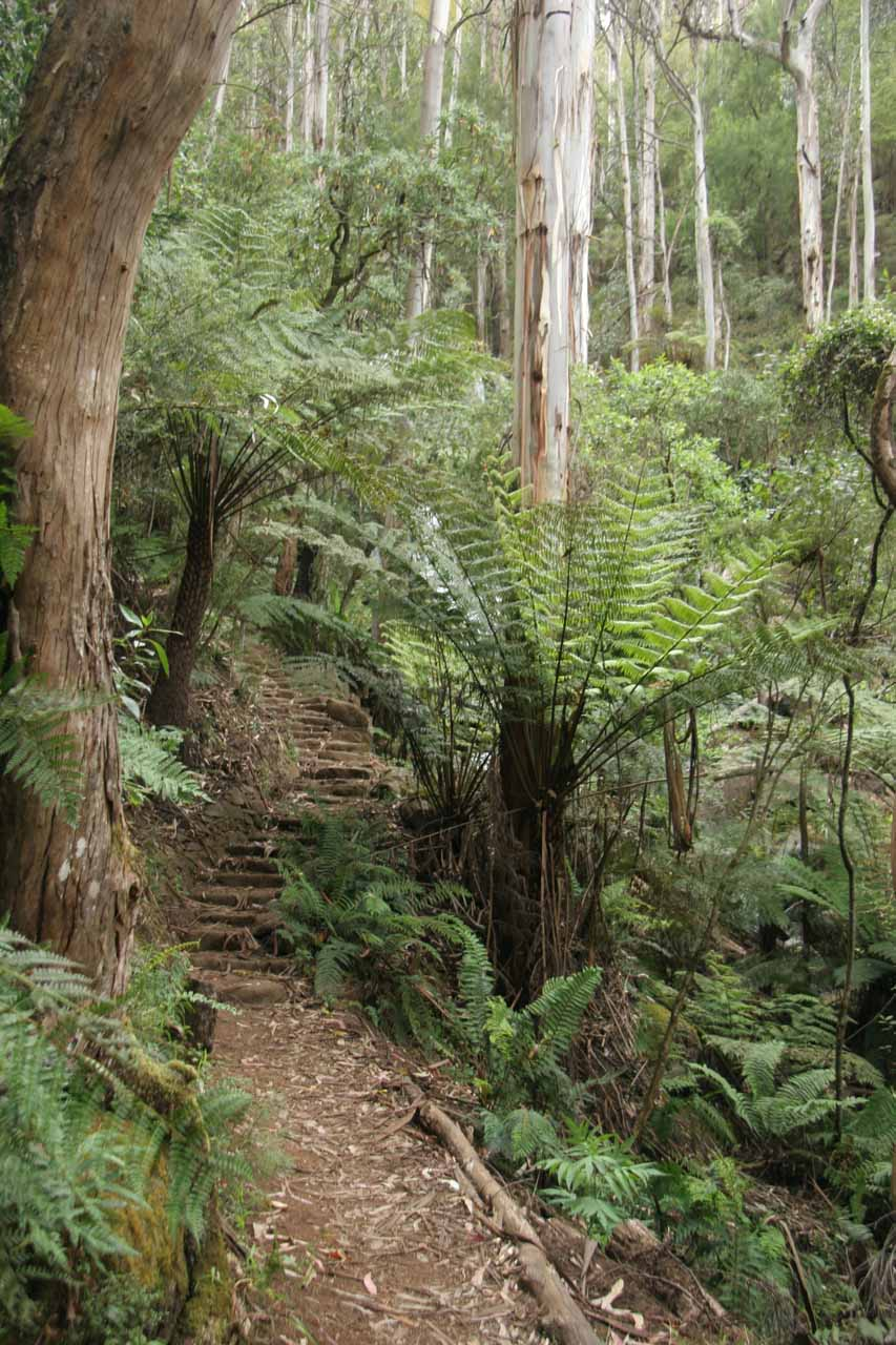 The ascending trail leading up to the Toorongo Falls
