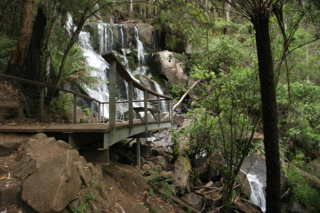 The viewing deck splitting Toorongo Falls