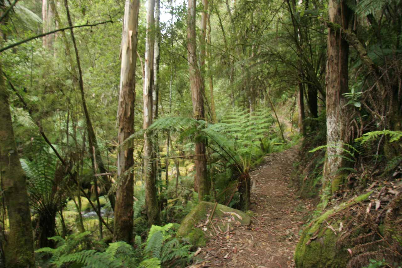 Following the trail back to the car park to complete the Toorongo Falls loop