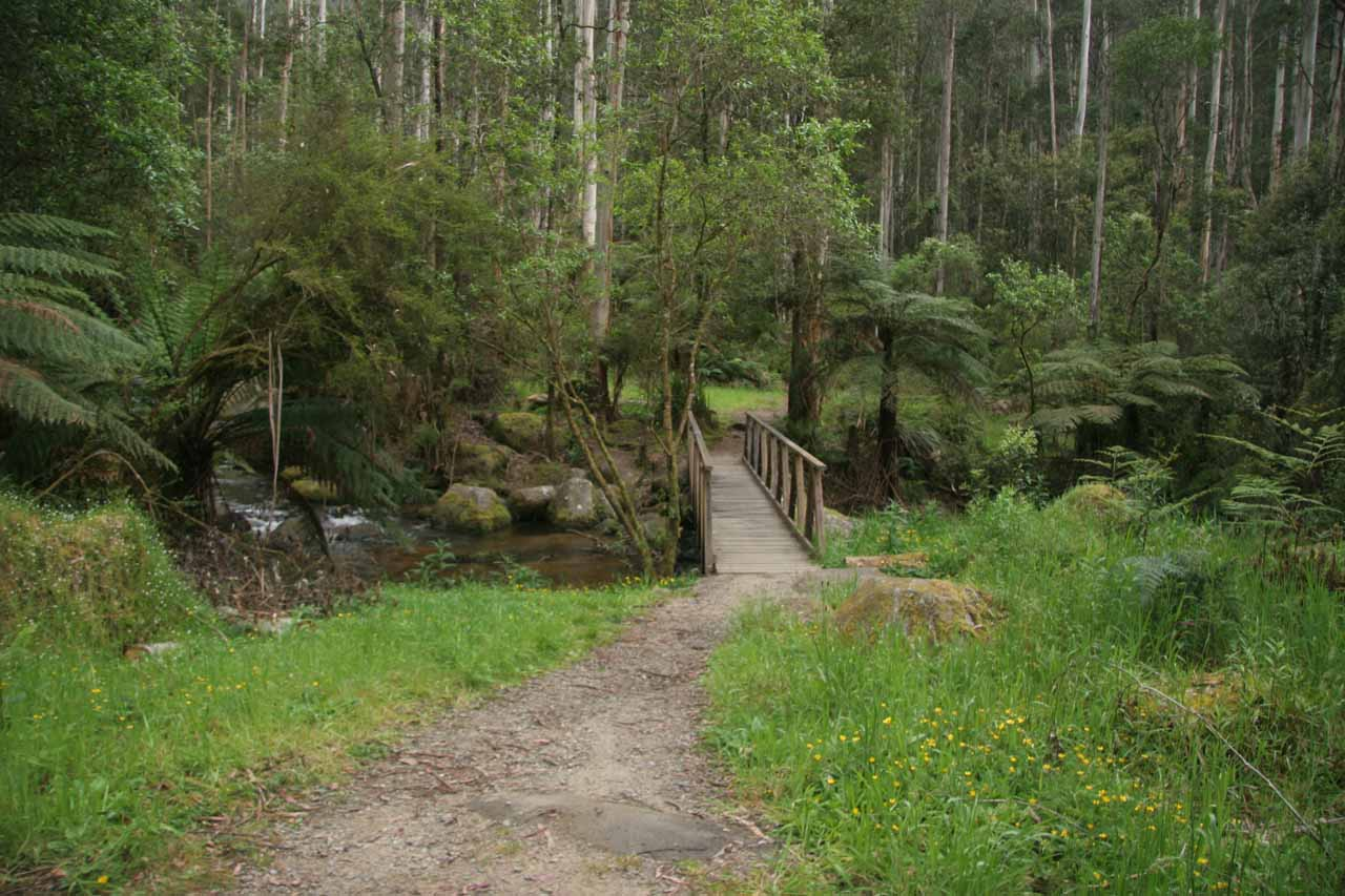 A bridge over the Little Toorongo River as I was almost back at the car park