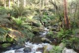 Toorongo_Falls_17_010_11222017 - Looking upstream at the Toorongo River during my November 2017 visit