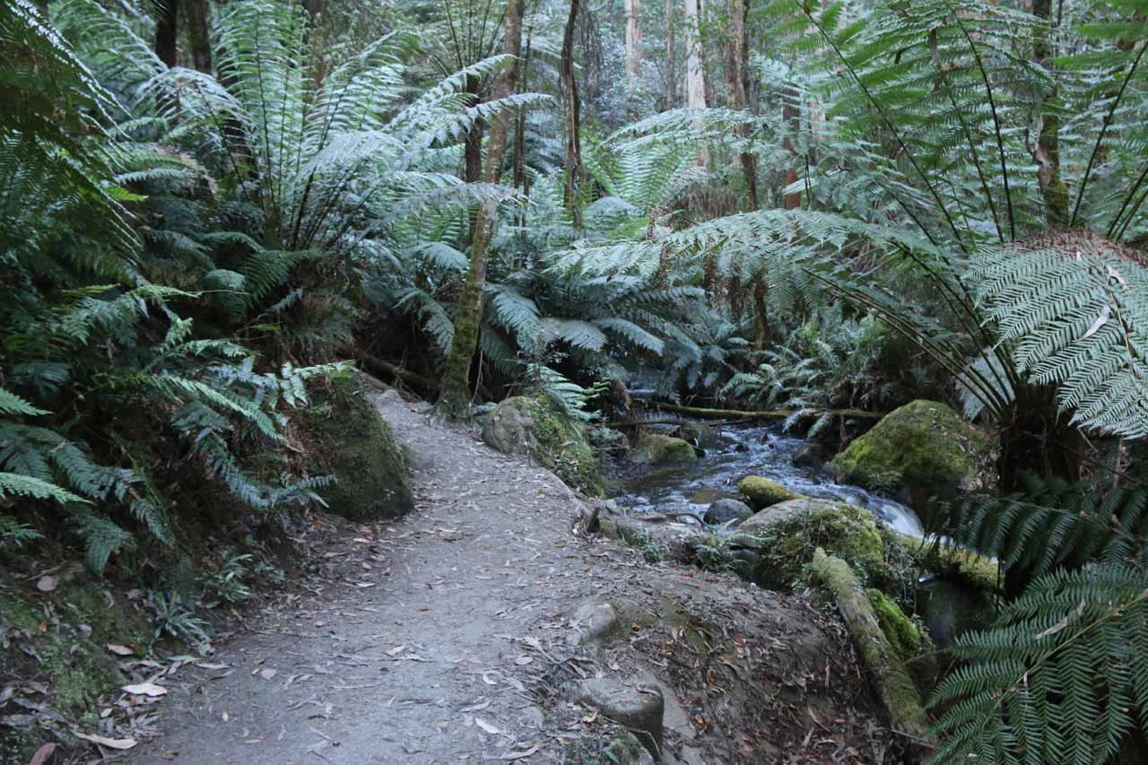The ascending track followed along the Little Toorongo River