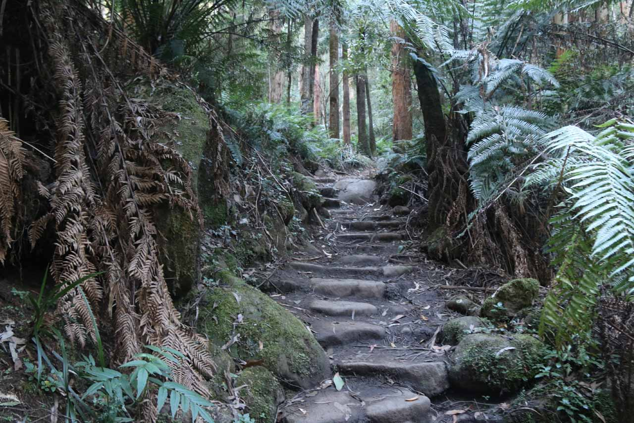 Most of the elevation gain was in this series of steps which definitely induced some sweat even on a cool misty morning