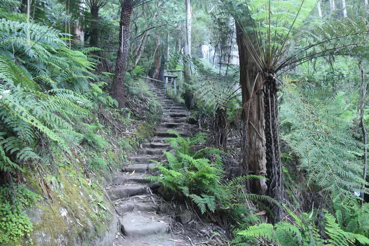Continuing the climb up to the viewing deck for the Toorongo Falls