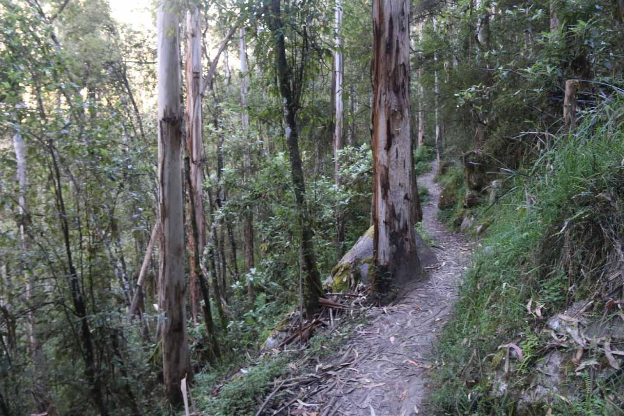 By this point, the narrow track skirted the slopes of the Toorongo River drainage
