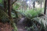 Toorongo_Falls_17_079_11222017 - Traversing through more fern-fringed scenery on the home stretch of the Toorongo Falls and Amphitheatre Falls circuit during my November 2017 visit
