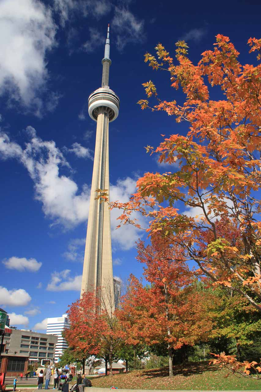 Looking back at the CN Tower through Autumn foliage while Tahia was busy playing at the playground