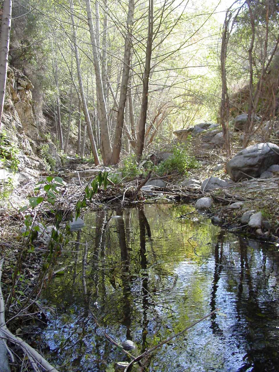 A calm pond seen along the trail