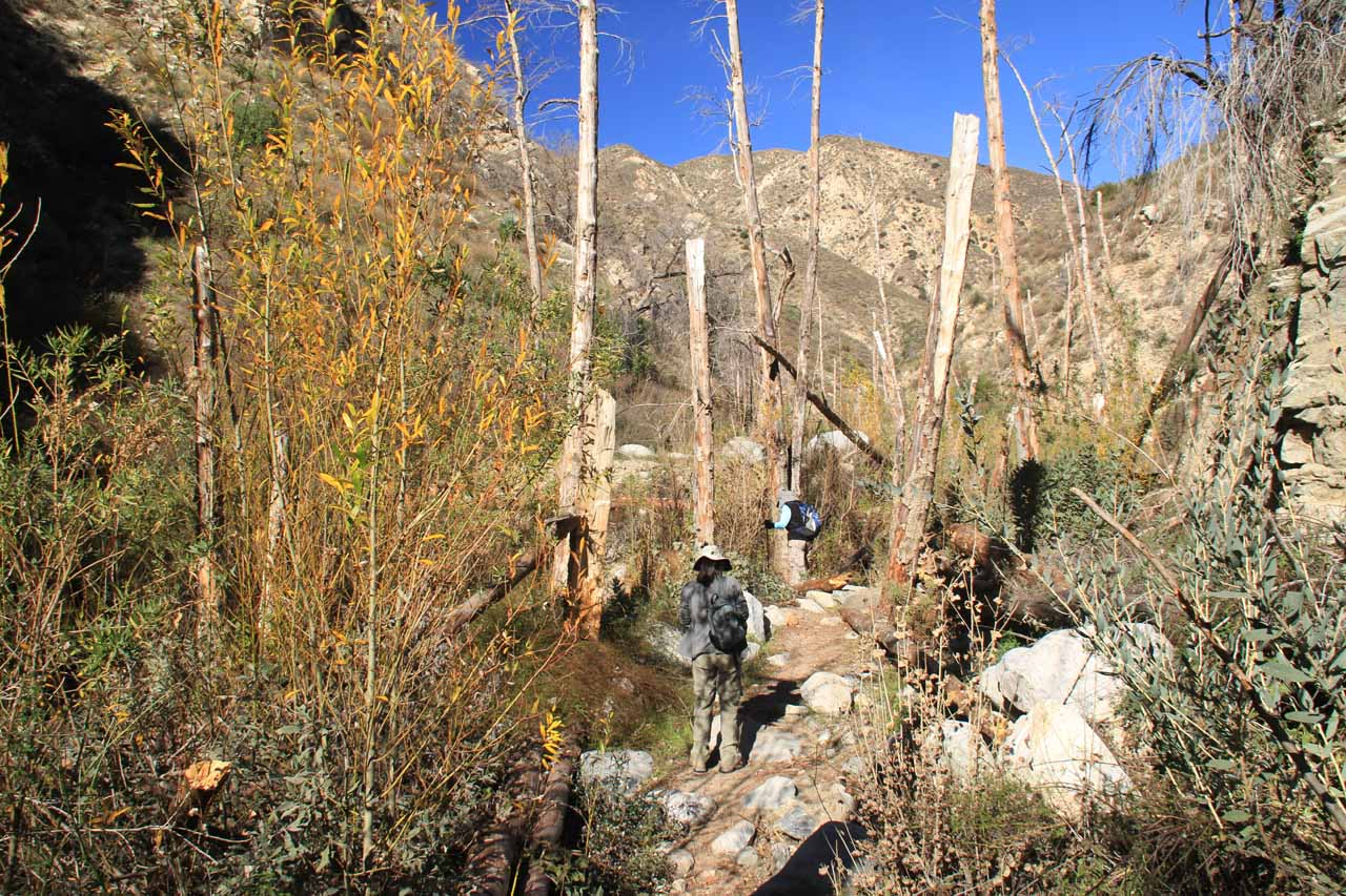 Hiking through Trail Canyon with much of the tree cover lost due to the Station Fire