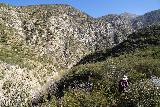 Trail_Canyon_Falls_166_02082020 - Julie walking in the downstream direction in pursuit of the steep scramble to the bottom of Trail Canyon Falls as of February 2020