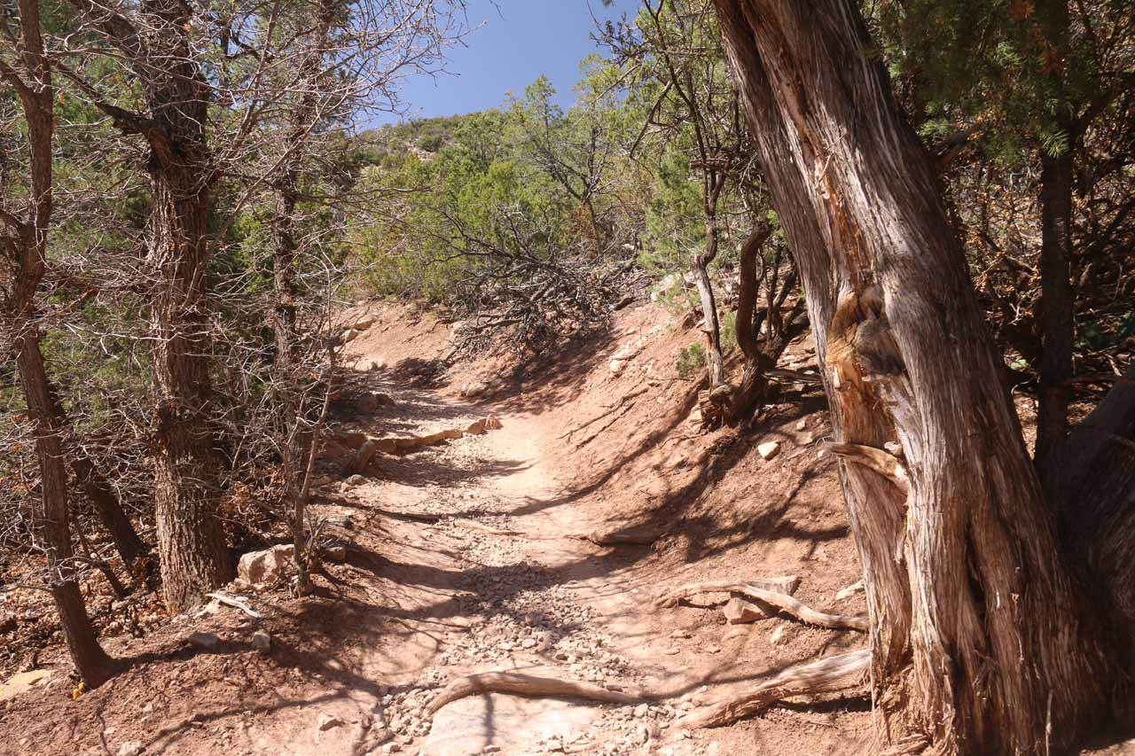 Even though the Travertine Falls Trail was flanked by some dry-looking trees, this was pretty much the extent of the shade that I was getting throughout this hike