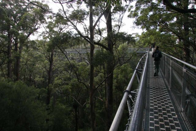 Tree_Top_004_06192006 - A little over an hour of driving from Northcliffe towards the town of Walpole was the Tree Top Walk, where we got to walk amongst the treetops as its name would suggest