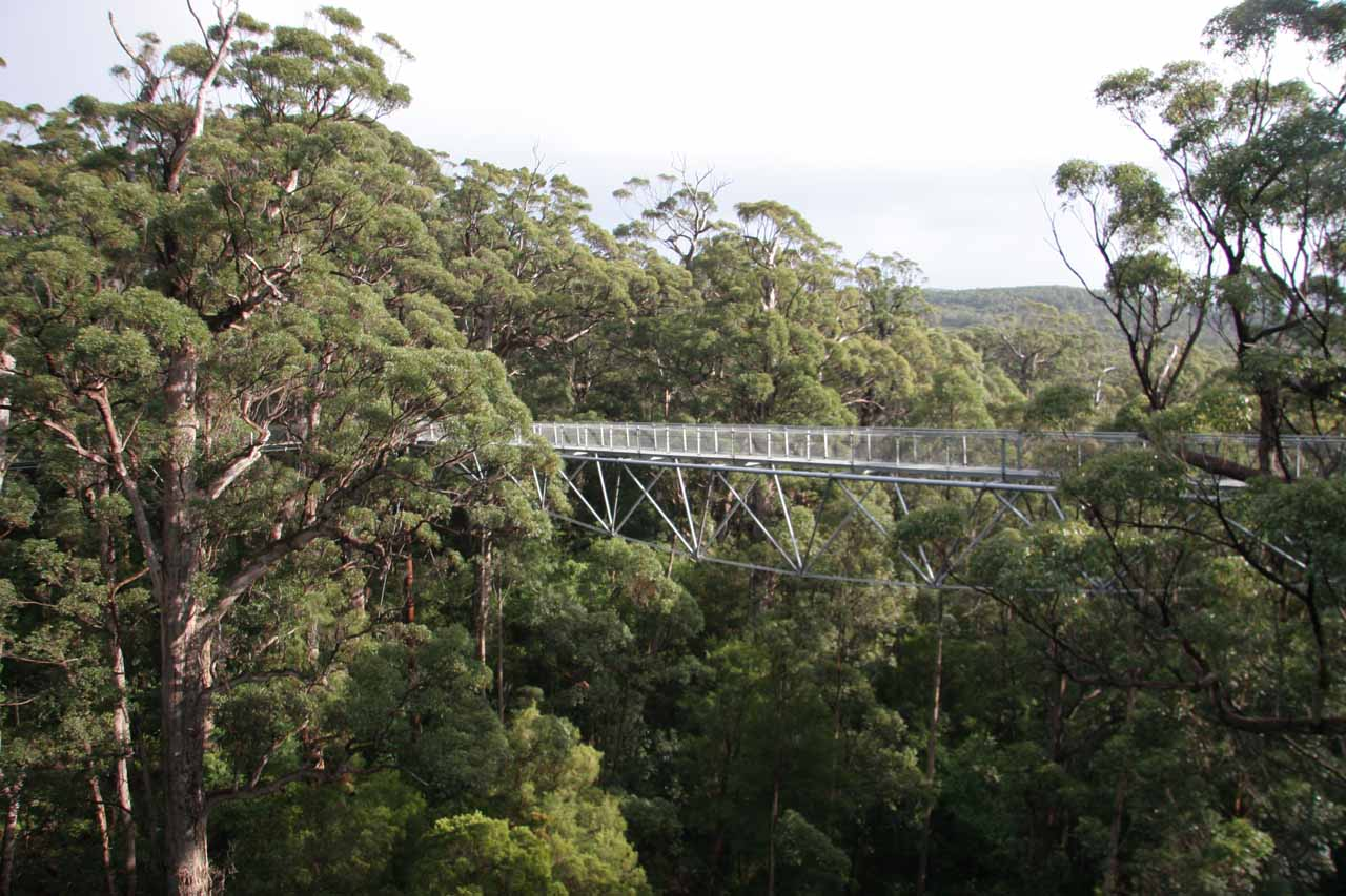 Near Fernhook Falls (which itself was near Walpole) was the Valley of the Giants Tree Top Walk, which allowed us to walk high above tall karri and tingle trees
