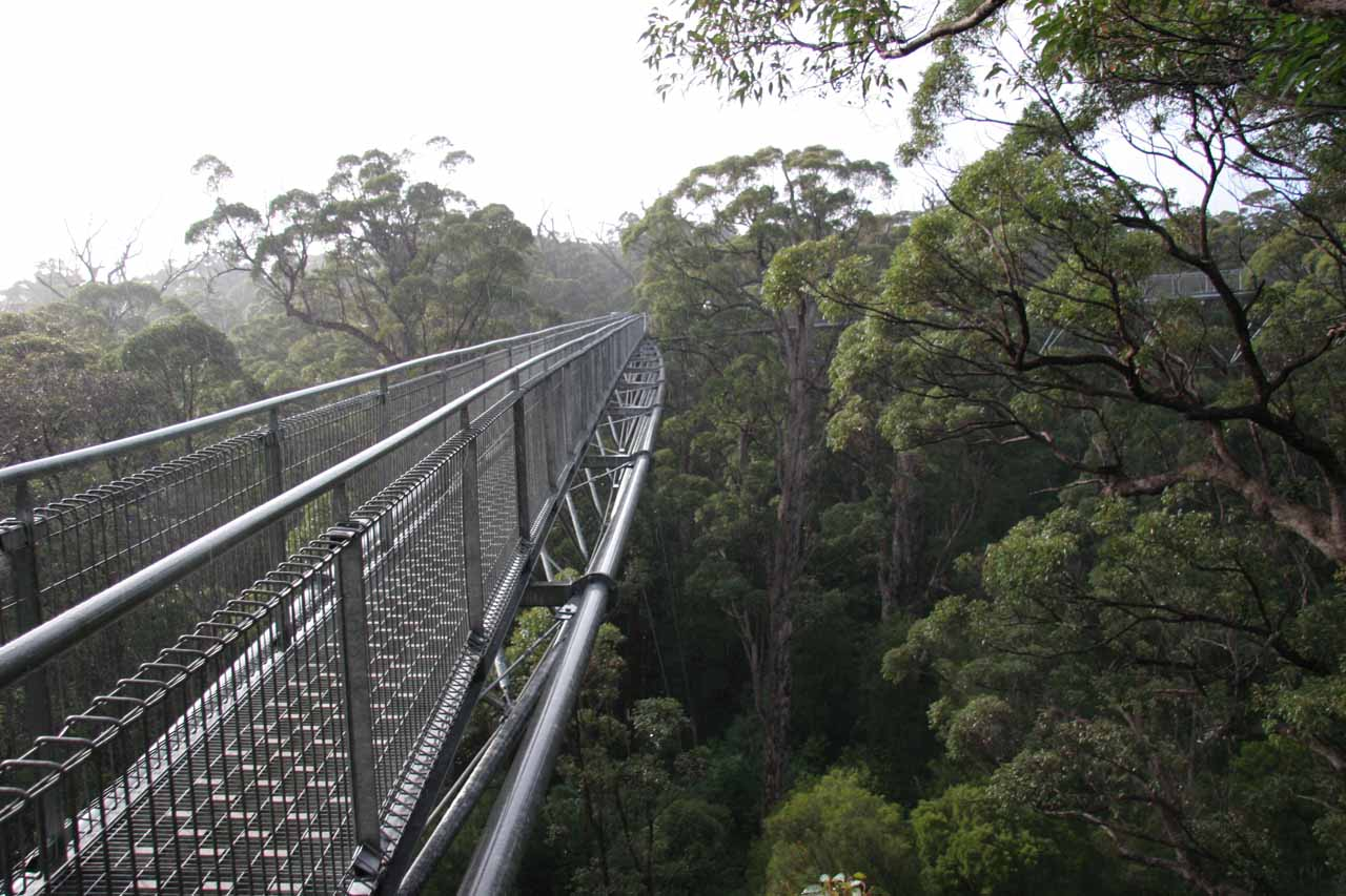 Just as soon as the sun came out, so did the rain on the Tree Top Walk