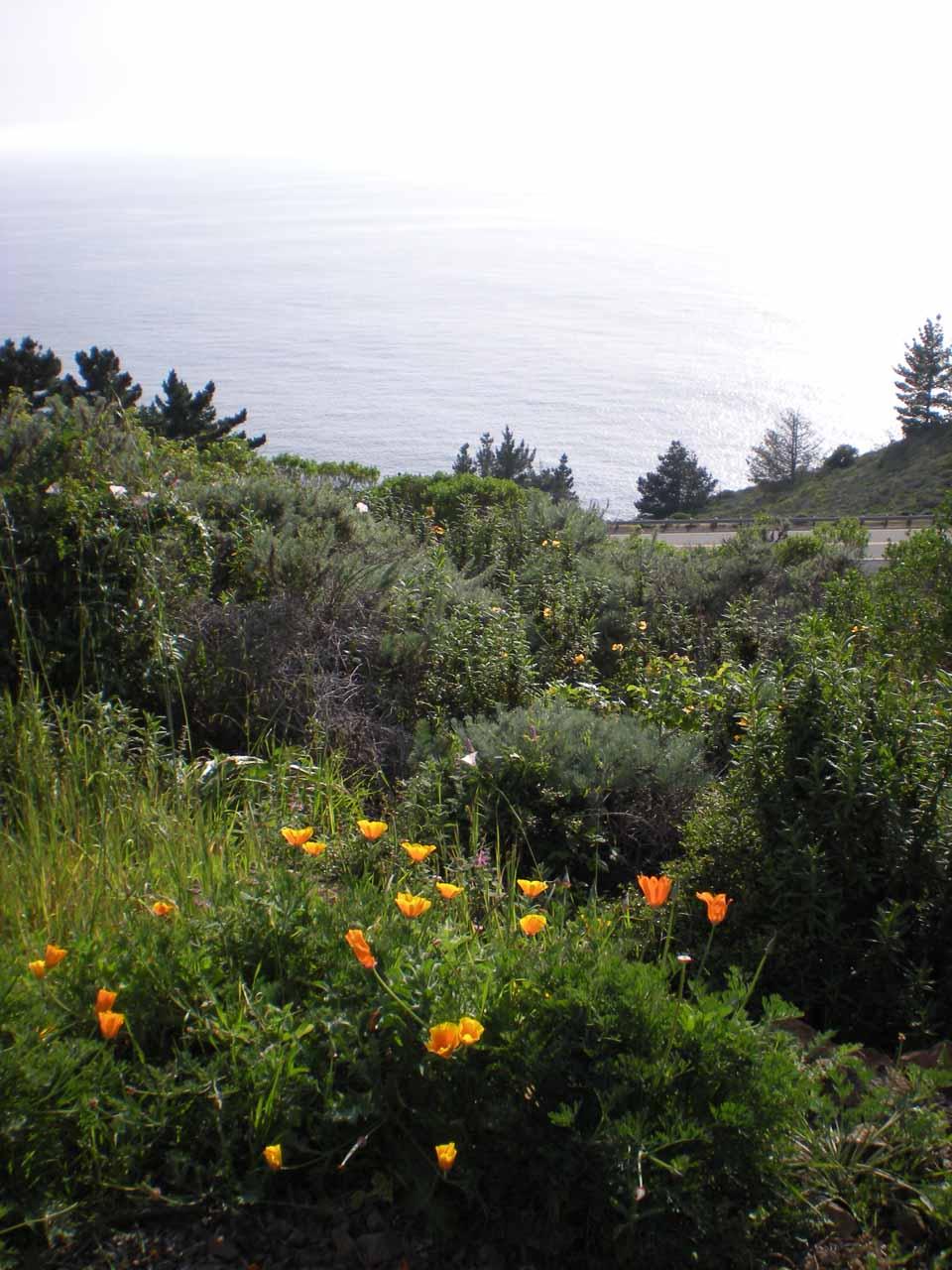 Ocean view from Treebones