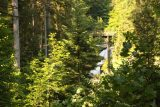 Triberg_037_06212018 - Looking through the foliage towards the Triberg Waterfalls in the distance