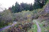Trillium_Falls_011_11212020 - This was where the Trillium Falls Trail branched off from the Davidson Trail