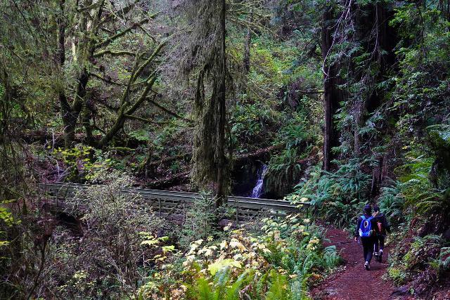 Trillium_Falls_044_11212020 - Approaching the hiker's bridge over Trillium Creek fronting the Trillium Falls