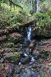 Trillium_Falls_054_11212020 - Checking out Trillium Falls from the hiker's bridge over Trillium Creek