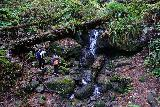 Trillium_Falls_061_11212020 - Another look at Trillium Falls with some people ignoring the park's advice and scrambling to its base (causing further erosion) and bringing a dog (causing a dangerous situation if it encounters a herd of Roosevelt Elk)