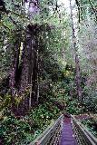 Trillium_Falls_065_11212020 - Looking back across the hiker's bridge over Trillium Creek towards redwoods
