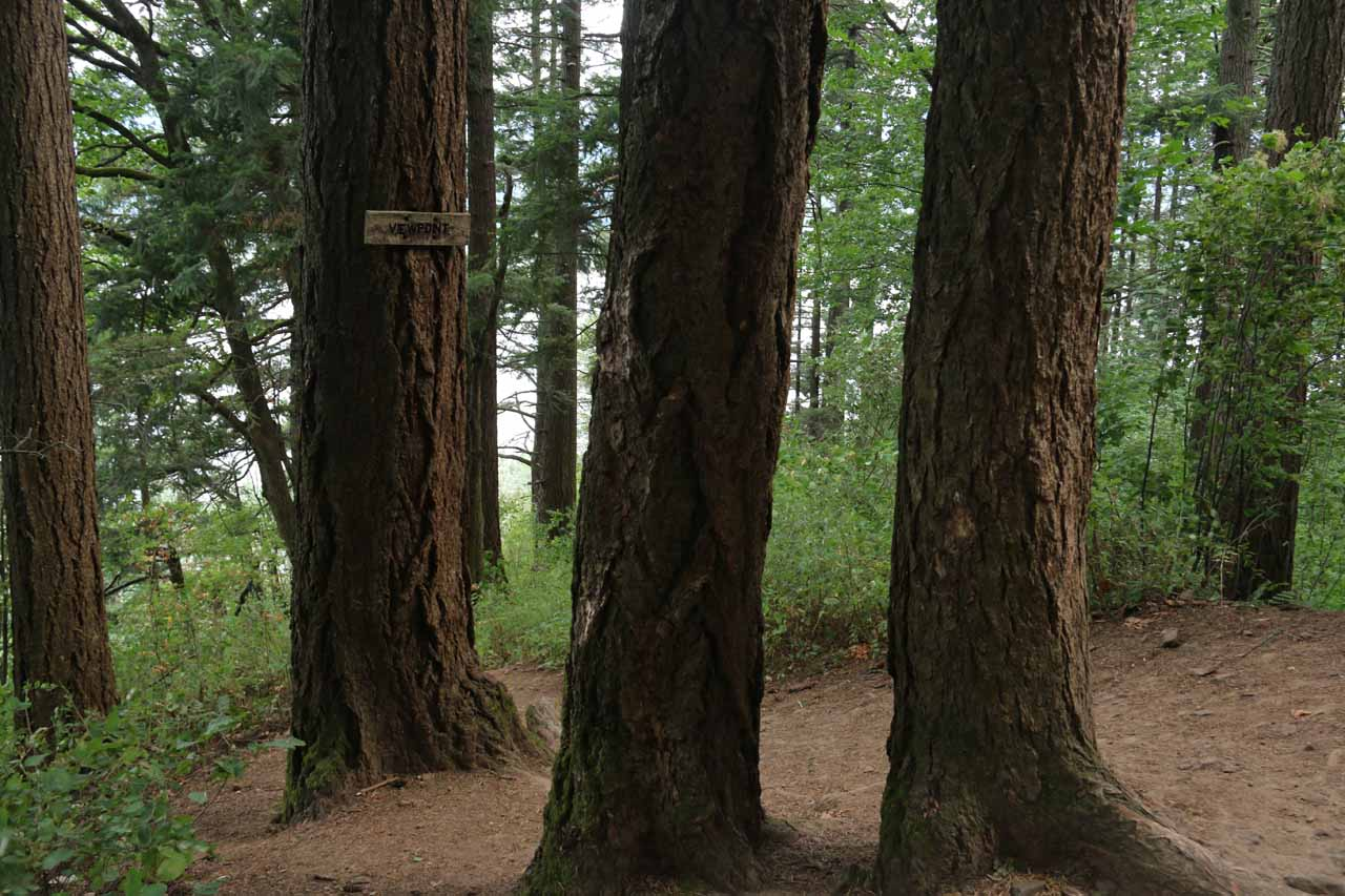 Sign on a tree indicating a detour descending towards some 'Viewpoint'