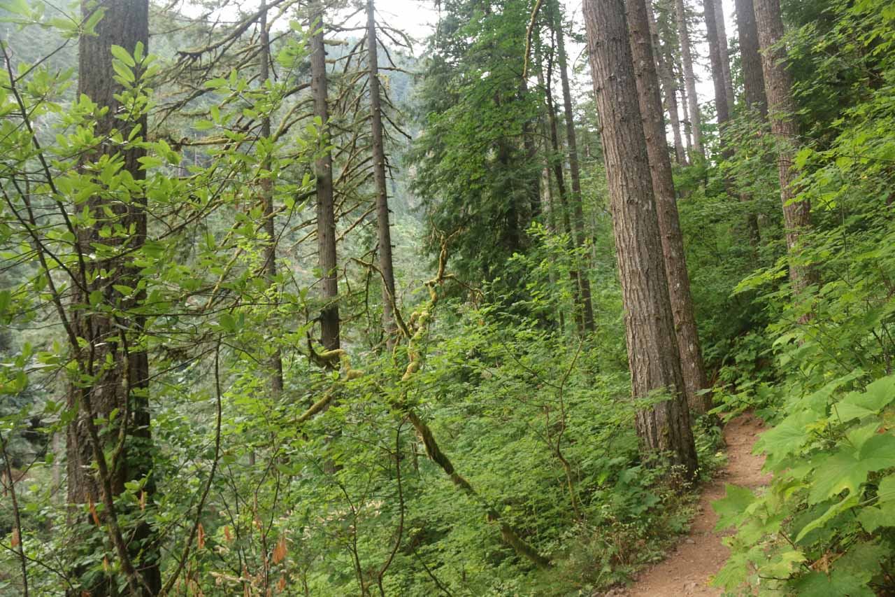 The Oneonta Trail now entered the Oneonta Gorge and followed along its contours