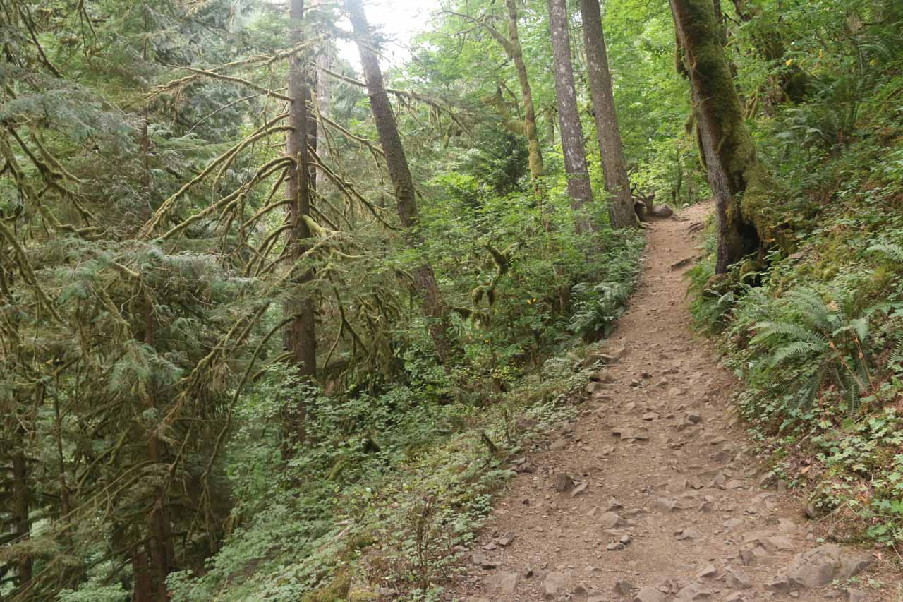 The Oneonta Trail continued to climb the further I went