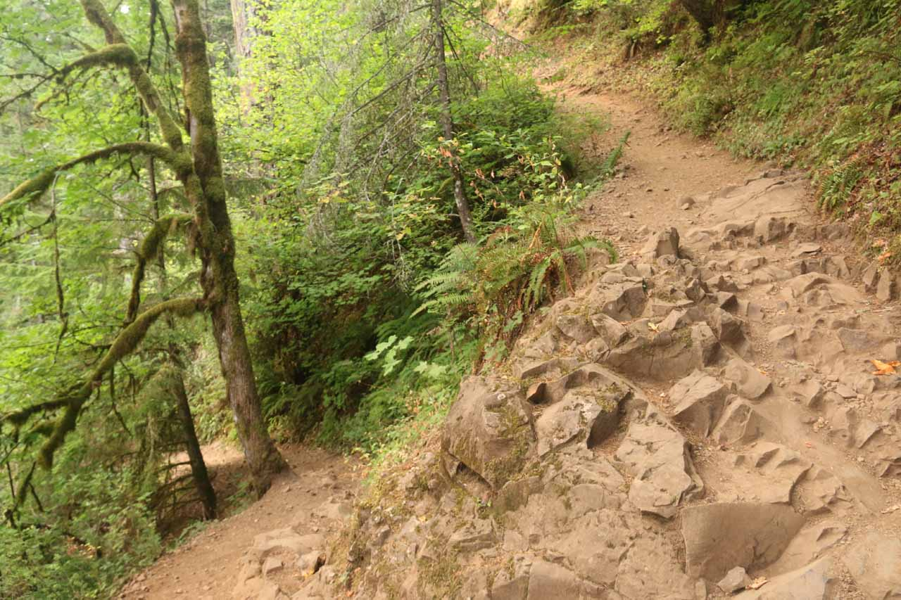 The Oneonta Trail climbed up a couple more switchbacks as the climbing continued