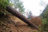 Triple_Falls_CRG_068_08172017 - Looking back at a fallen-tree obstacle that I had to crawl on the way to the Triple Falls lookout (as well as on the way back) during my August 2017 hike