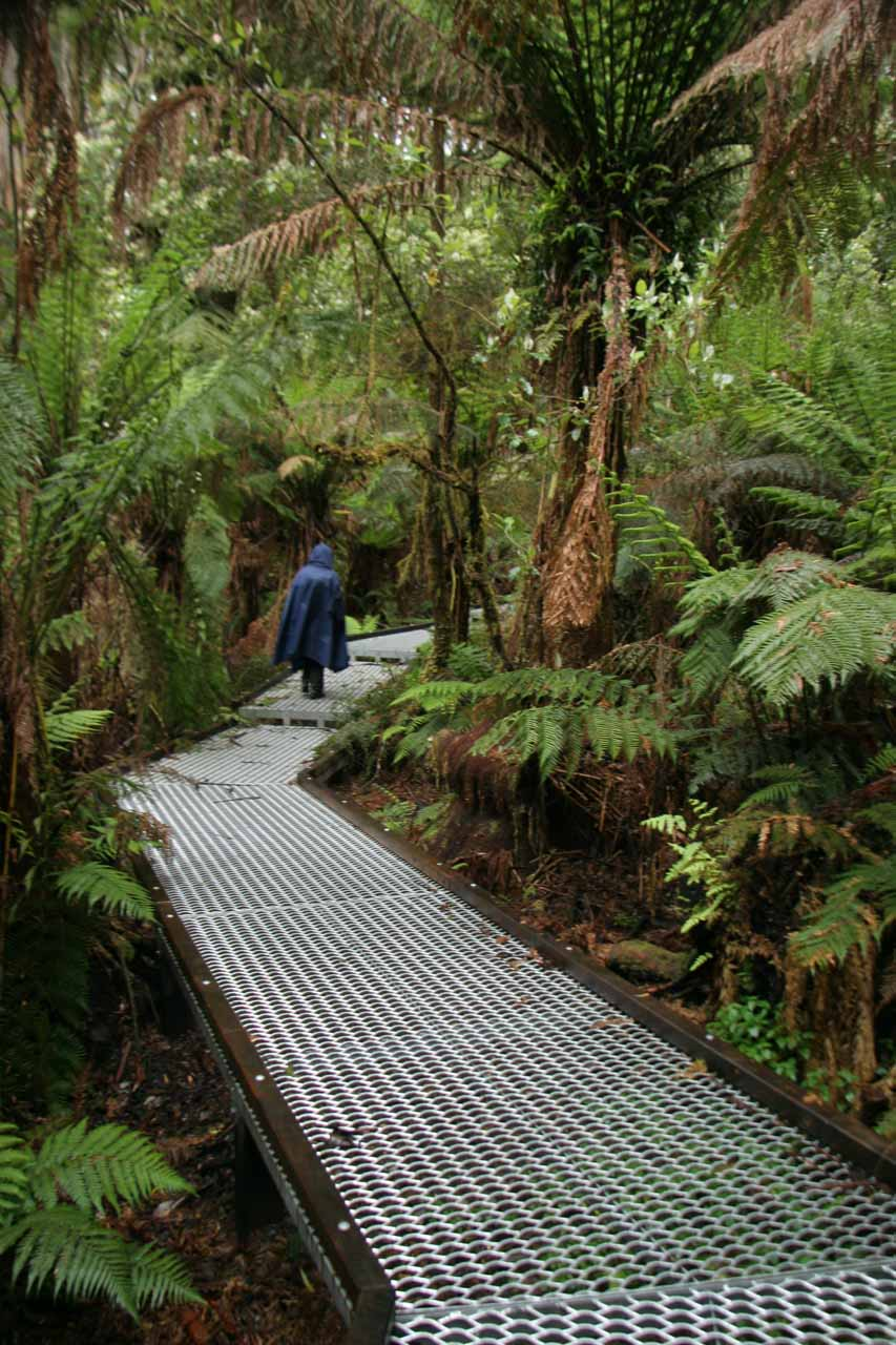 Julie on the flat metal grate portion of the rainforest track. The metal grating was necessary to reduce the impact of foot traffic on the fragile soil