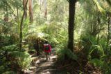Triplet_Falls_17_015_11172017 - Julie descending into the forest along the Triplet Falls Loop Track during our November 2017 visit