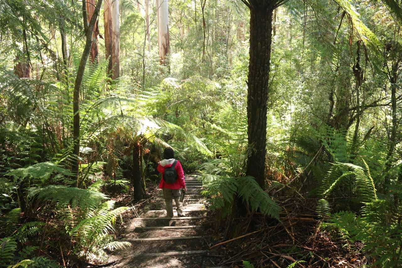 Julie descending into the forest along the Triplet Falls Loop Track