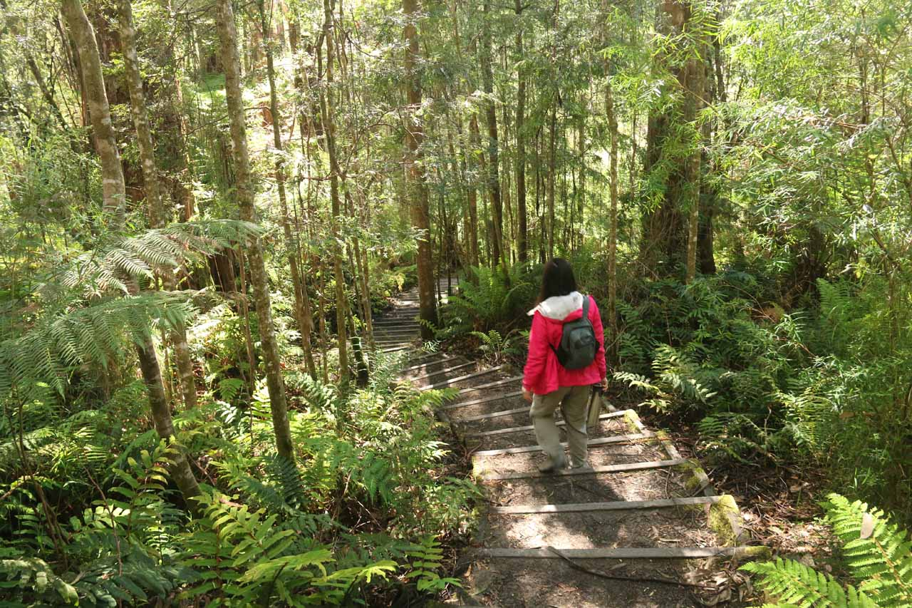 Julie continuing the long descent towards the forest floor en route to Triplet Falls