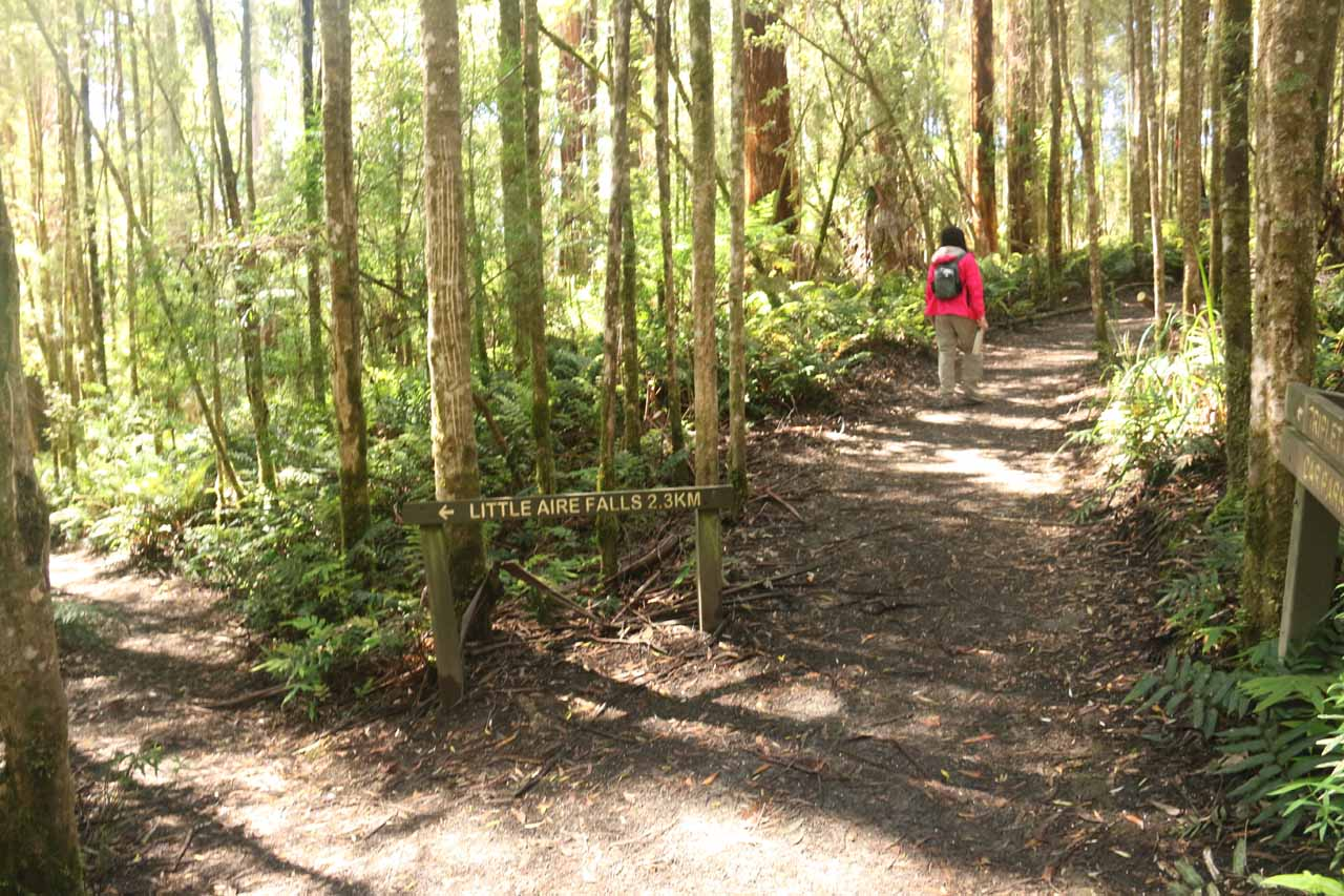 Forsaking the Little Aire Falls Track and continuing on the loop walk to Triplet Falls