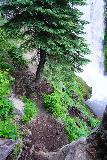 Tumalo_Falls_063_06272021 - Context of some tree roots and the base of Tumalo Falls