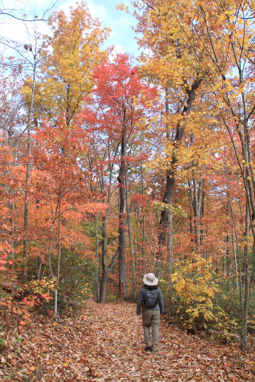 Gorgeous Fall colors on the trail